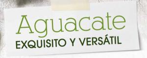 Revista-Maxi-El-aguacate-versatil