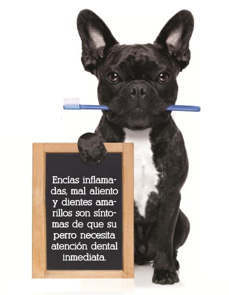 Revista Maxi - Mascotas