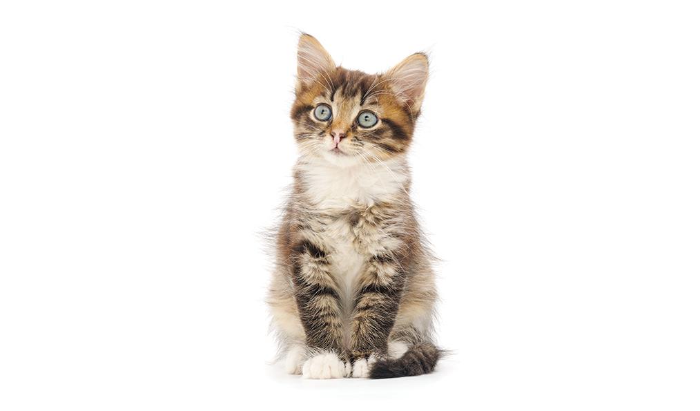 Basicos del cuidado de su gato