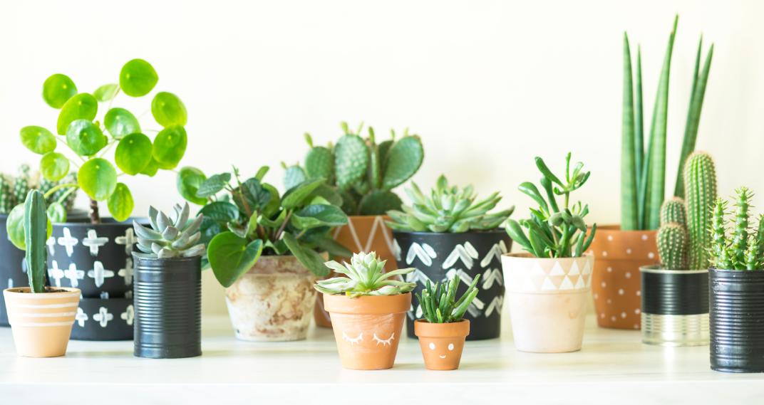 Obsequiar plantas es regalar vida