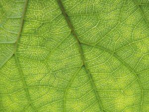Revista-Maxi---pefc-aliados-de-la-ecologia