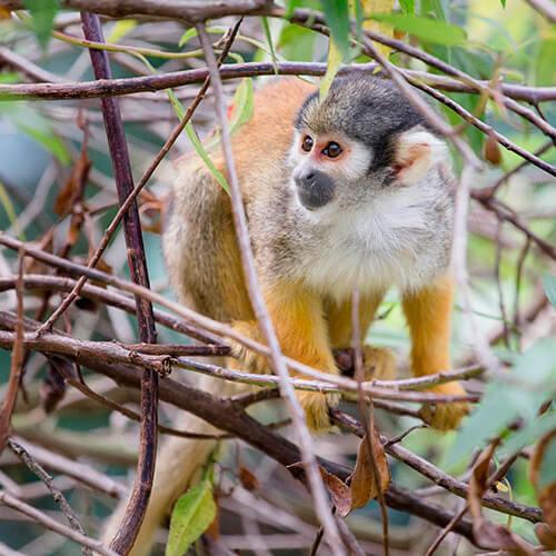 Zoo Bioparque Amaru