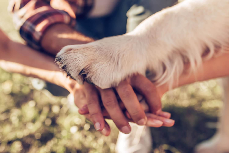 Niños responsables y mascota contenta