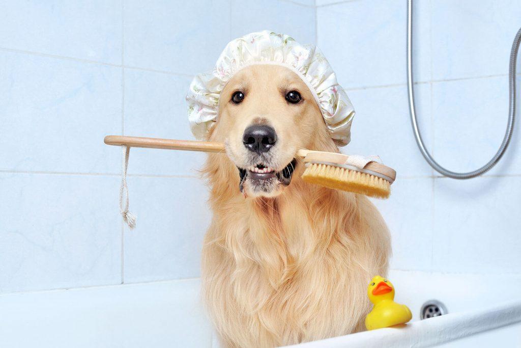 Hora del baño, ¡pura diversión!