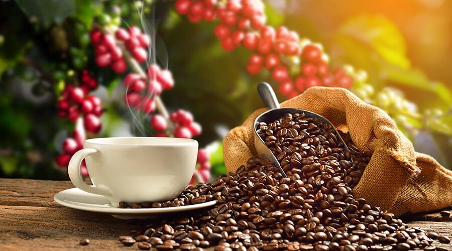 historia-el-cafe-ecuatoriano-deleita-y-sorprende-